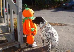 Dizzy_pumpkin