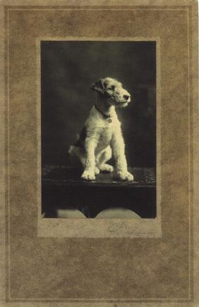 Dogs_vintage_fox_terrier_2