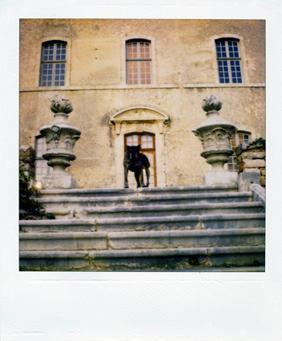 Polaroid_dog_aix