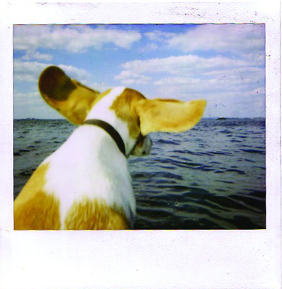 Polaroid_dog_water