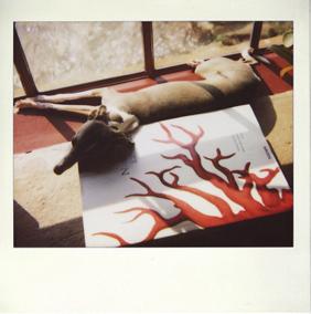Polaroid_dog_whippet