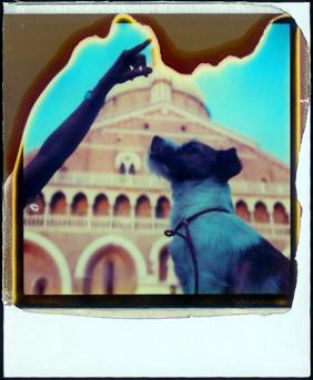 Polaroid_dog_zig
