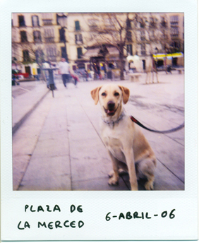 Polaroid_dogs_norman