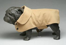 Windsor_pug_coat