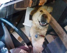 Dog_car_postcard