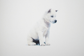 Japanese_dog_graphic_5