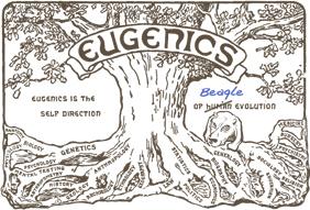 Beagle_eugenics