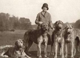 the Irish Wolfhound on...