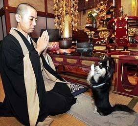 Praying_chihuahua_zen_dog_2