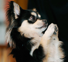 Praying_zen_dog