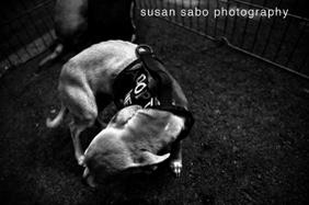 Susan_sabo_dog_photo