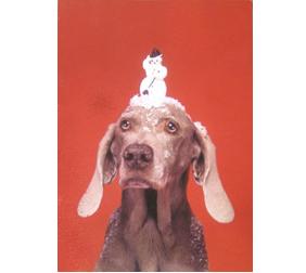 Dog Art Today: William Wegman's 2008 Calendars, Christmas Cards ...