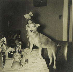 Dogs Vintage Birthday 3